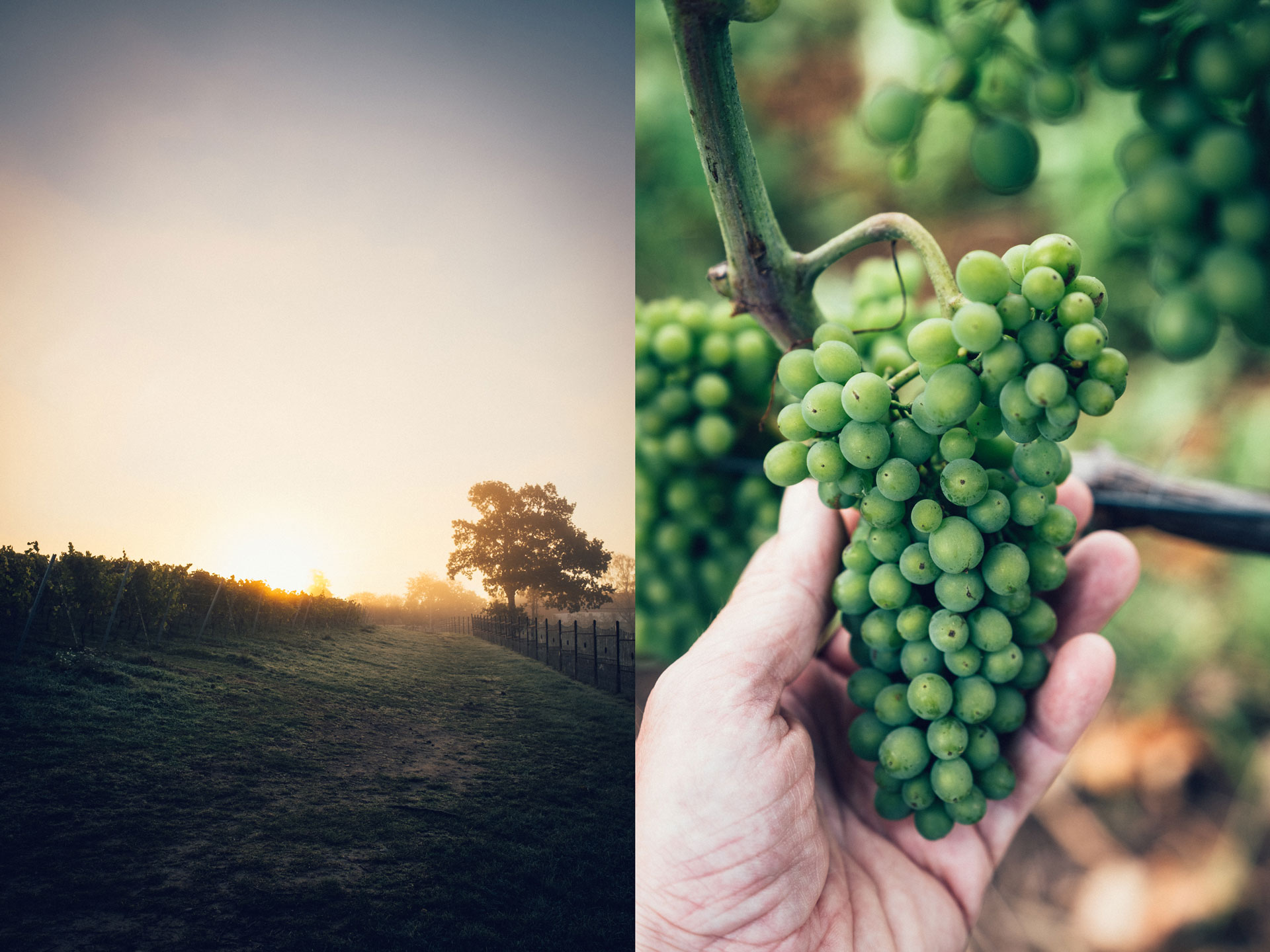 wineyard_astad